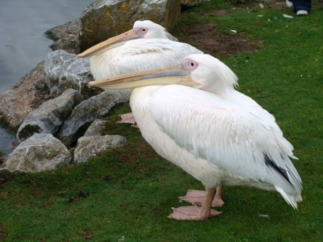 Zdjęcia: FOTA, Fota Wildlife Park #13, IRLANDIA