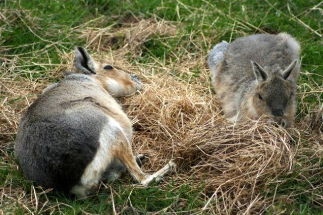 Zdjęcia: FOTA, Fota Wildlife Park #18, IRLANDIA