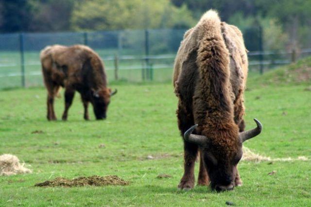 Zdjęcia: FOTA, Fota Wildlife Park #19, IRLANDIA
