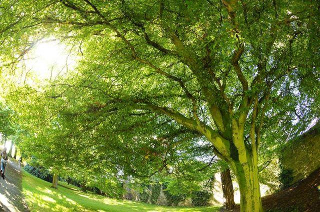 Zdjęcia: Dublin Ogród botaniczny, Na zielono, IRLANDIA