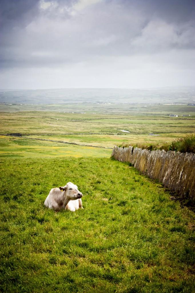 Zdjęcia: Cliffs of Moher, Clare, Irish, IRLANDIA