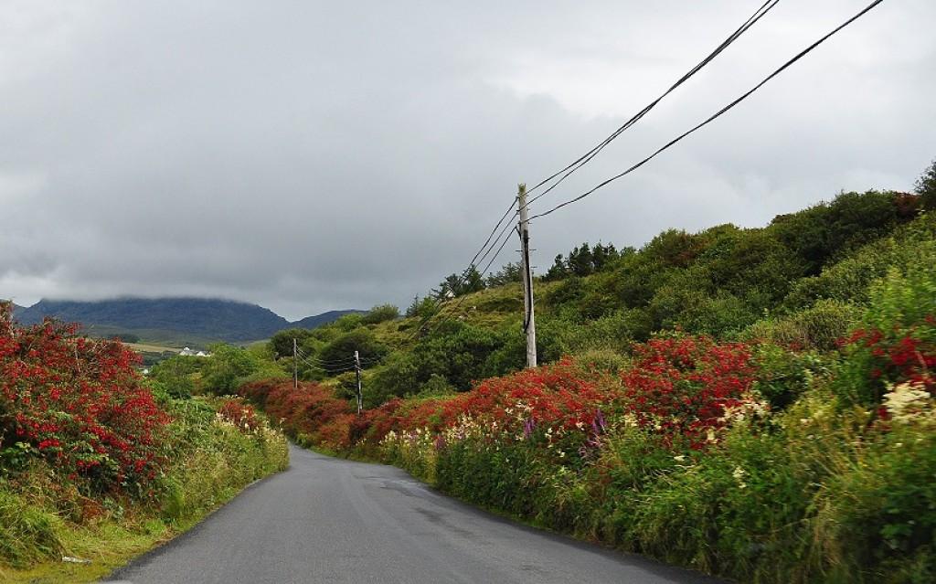 Zdjęcia: Pd Irlandia, Pd Irlandia, Drogi Irlandii, IRLANDIA