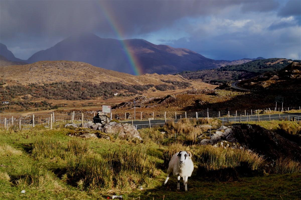 Zdjęcia: Moll's Gap, Kerry, Po drugiej stronie tęczy :), IRLANDIA