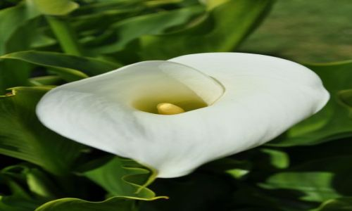 Zdjecie IRLANDIA / - / Dublin Botanic Garden\\\'s / :)