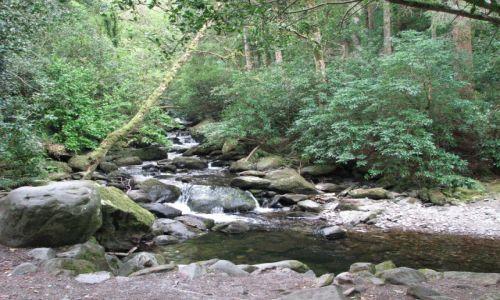 Zdjęcie IRLANDIA / Killarney / Park Narosowy Killarney / Park Narosowy Killarney