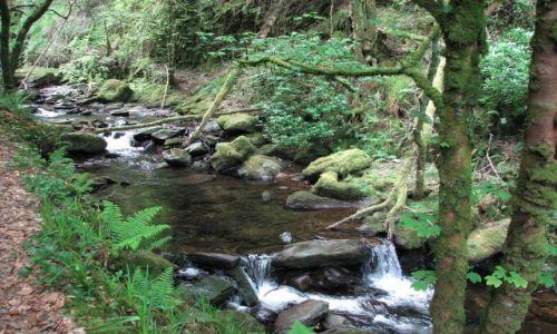 Zdjęcie IRLANDIA / Killarney / Park Narodowy Killarney / Park Narodowy Killarney