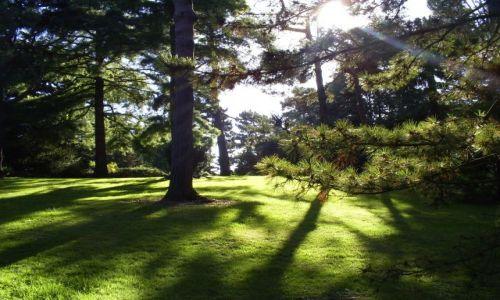 Zdjęcie IRLANDIA / Dublin / Botanic Gardens - Glasnevin / botanic gardens