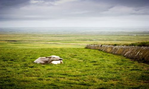 Zdjecie IRLANDIA / Clare / Cliffs of Moher / konkurs