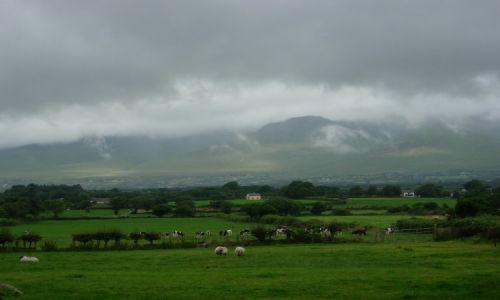 Zdjęcie IRLANDIA / hrabstwo Kerry / okolice Tralee / My Irish reality