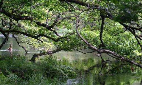 Zdjęcie IRLANDIA / brak / Killarney / Park Narodowy w Killarney