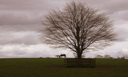 Zdjecie IRLANDIA / Co. Kildare / Narodowa stadnina koni / Konie na wzgórzu