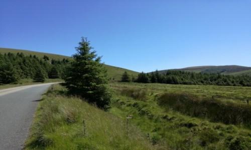 Zdjecie IRLANDIA / Co.Wicklow / Wicklow / Góry Wicklow