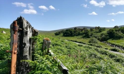 Zdjecie IRLANDIA / Co.Wicklow / Wicklow Mountains / Sally Gap