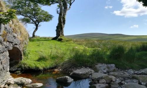 Zdjecie IRLANDIA / Wicklow / Wicklow Mountains / Sally Gap