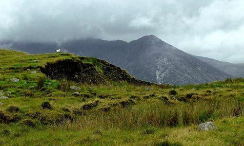 Zdjęcie IRLANDIA / brak / connemara / samotna owca
