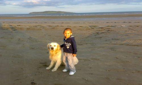 Zdjecie IRLANDIA / tuam / okolice oceanu / nawet znalazł sie pies