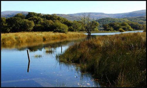 Zdjęcie IRLANDIA / co. Kerry / Killarney National Park / Killarney National Park