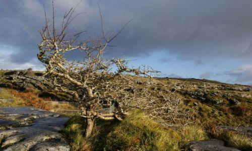 Zdjecie IRLANDIA / The Burren / Irlandia / ...