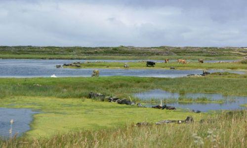 Zdjecie IRLANDIA / Aran Islands / Inishmore / Sielskie krajobrazy