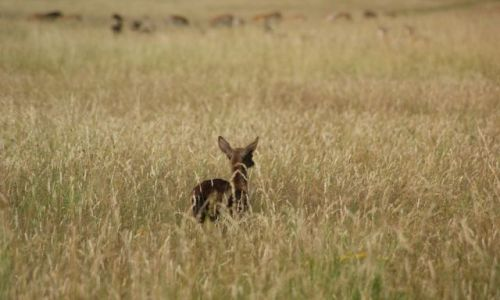 Zdjecie IRLANDIA / okolice Dublina / Phoenix Park / Bambi3