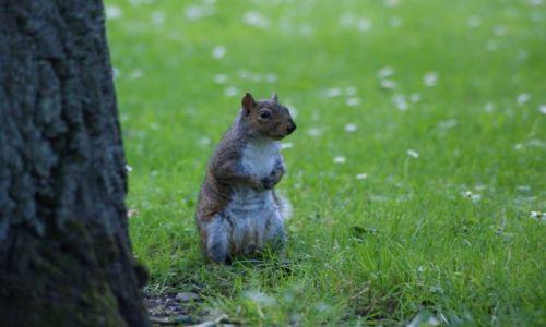 Zdjecie IRLANDIA / Dublin / Ogród Botaniczny / W czym mogę pomóc? :)