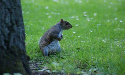 Zdjecie IRLANDIA / Dublin / Ogród Botaniczny / W czym mogę pomóc2