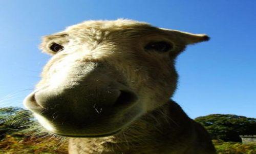 Zdjęcie IRLANDIA / Co.Kerry / Killarney National Park / Wprawdzie to nie piesek ale też sierściuch