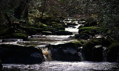 Zdjecie IRLANDIA / Portlaoise  / Glenbarrow / Koryto rzeczne