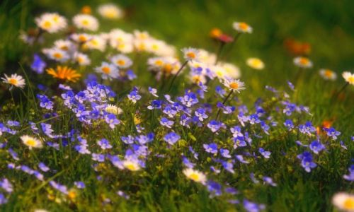 Zdjęcie IRLANDIA / brak / brak / Wiosenny dywan