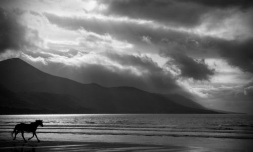 Zdjęcie IRLANDIA / Kerry / Dingle Bay / Dingle Bay