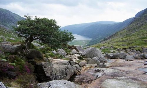 Zdjecie IRLANDIA / Wicklow mountains / Glendalough Upper Lake / W góry