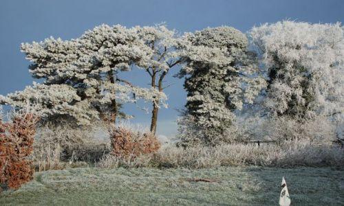 Zdjęcie IRLANDIA / kildare / rathangan / zima na zielonej wyspie