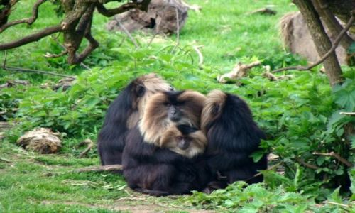 Zdjęcie IRLANDIA / - / Fota / Fota Wildlife Park #3