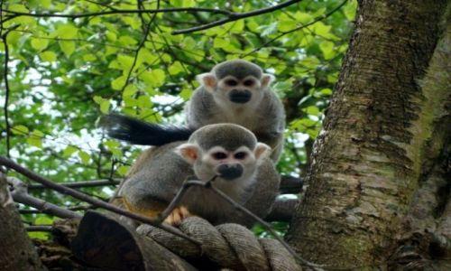 Zdjęcie IRLANDIA / - / Fota / Fota Wildlife Park #4