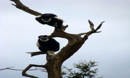 Zdjęcie IRLANDIA / - / Fota / Fota Wildlife Park #5