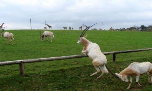 Zdjecie IRLANDIA / - / Fota / Fota Wildlife Park #9