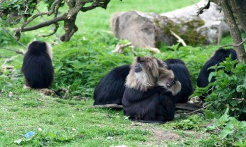 Zdjęcie IRLANDIA / - / FOTA / Fota Wildlife Park #15