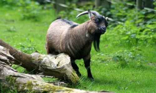 Zdjęcie IRLANDIA / - / FOTA / Fota Wildlife Park #17