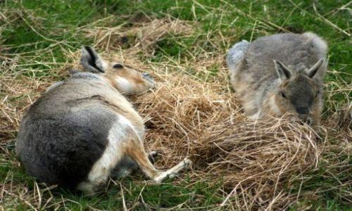 Zdjęcie IRLANDIA / - / FOTA / Fota Wildlife Park #18