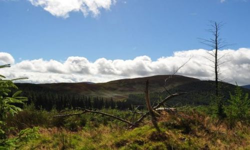 IRLANDIA / - / Irlandia Góry Wicklow / Na szlaku