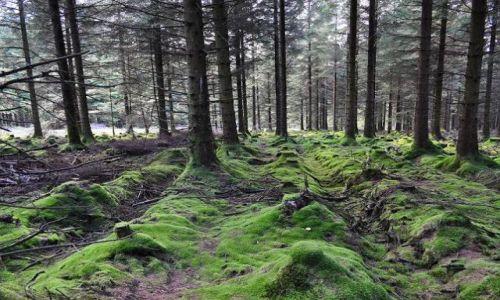 Zdjecie IRLANDIA / - / Góry Wicklow / W lesie