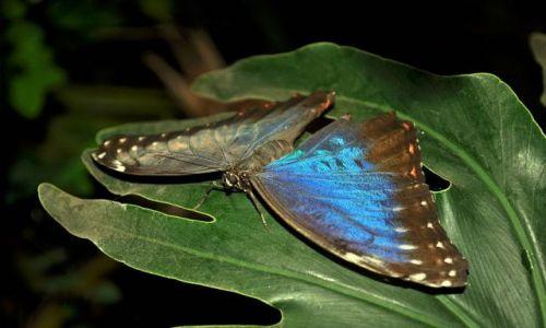 Zdjęcie IRLANDIA / - / okolice Swords(farma motyli) / Motyl