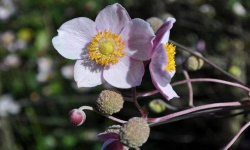 Zdjecie IRLANDIA / - / Dublin Ogród Botaniczny / Kwiat