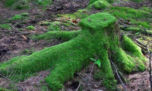IRLANDIA / - / W górach Wicklow / Leśna osmiornica:)
