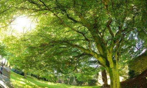 Zdjecie IRLANDIA / - / Dublin Ogród botaniczny / Na zielono