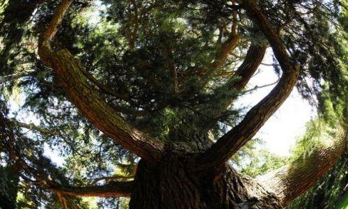 Zdjecie IRLANDIA / - / Dublin Ogród Botaniczny / W objęciach