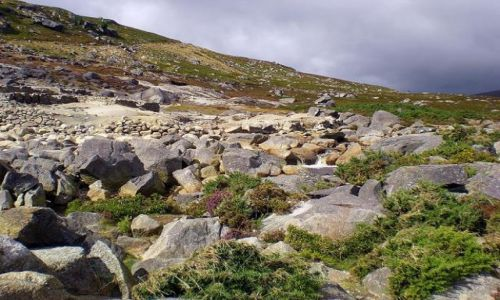 Zdjecie IRLANDIA / - / Góry Wicklow / W górach
