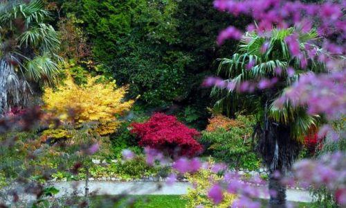 Zdjecie IRLANDIA / - / Powerscourt/Enniskerry / W japońskim ogrodzie