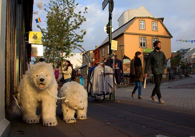 Zdjęcia: Reykjavik, Niedźwiedzie polarne ;), ISLANDIA
