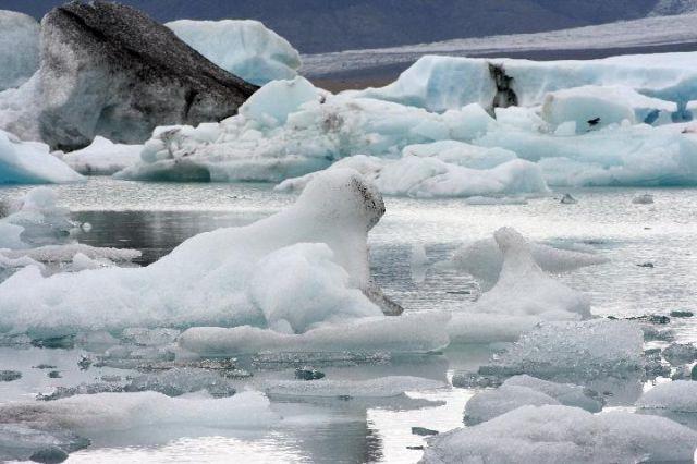 Zdjęcia: Jokursalon, południowa Islandia, foka i foczka, ISLANDIA